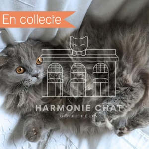 photo profil en collecte harmoniechat